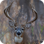Ultimate Deer Calls Apk Update Unlocked
