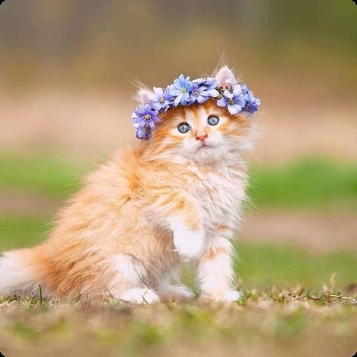 Kitten Wallpaper - Cute Cat Wallpapers icon